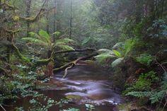 Pinner Creek Tarkine Rainforest by Nicole Anderson Australia Living, Tasmania, Countries Of The World, Continents, Wilderness, Waterfall, River, Island, Explore