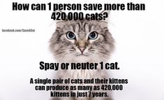 Save 420K Cats - visit www.CatTime.com to learn more!