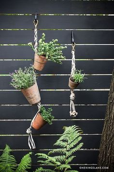 Special projects editor Megan Pflug shows us how to turn any terracotta pot into a vertical hanging garden!