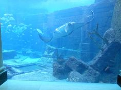 La légende de l'Atlantide est sûrement la plus connue du genre, mais plusieurs villes sous-marines existent pour de vrai ! Chargés d'histoire, ces lieux facinent toujours de part leur côté unique... Plongez à l...
