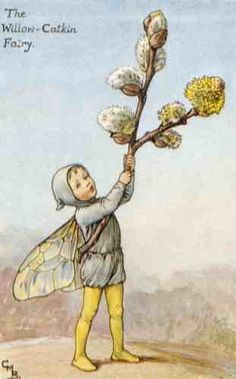 The WILLOW-CATKIN Fairy ~ Cicely Mary Barker ~