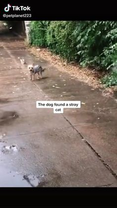 Cute Little Animals, Cute Funny Animals, Funny Cute, Cute Animal Videos, Cute Animal Pictures, Funny Animal Memes, Funny Dogs, Cute Puppies, Cute Dogs