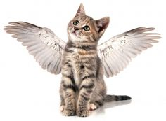Google Image Result for http://www.gspca.org.gg/sites/default/files/kitten-with-angel-wings.jpg
