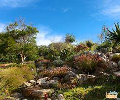 O Jardim Botânico de Kirstenbosch é considerado como um dos mais belos jardins botânicos do mundo. A riqueza na flora nativa da África do Sul - Mais de 7.000 variedades de plantas, das áreas verdes ao redor do cabo e das regiões mais áridas, encontram-se nos 36 hectares do jardim.