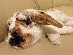 Beautiful bunny ❤️