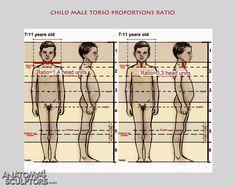 child male torso proportions ratio