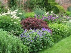 Arley Hall: Berberis, alliums, geranium and white Tradescantia.