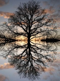 Tree of life by deborah - beautiful!