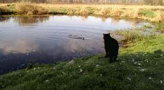 Curious Otter & Cat
