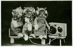 Gatitos escuchado radio miau