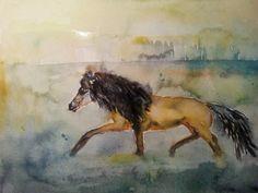 Couragio miniaturehorse stallion