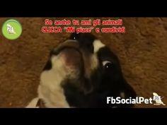 Cani che si sentono colpevoli FbSocialPet » Canale Video » FbSocialPet: social network per cani, gatti, cavalli, tutti gli animali