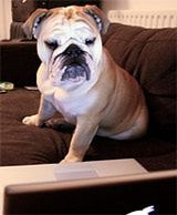 Shopping for Pet Insurance: What To Look For