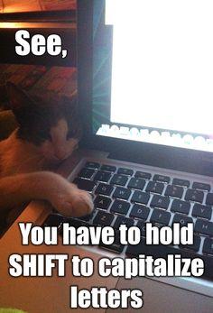 Cat meme!!!