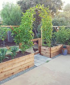 The current state of the patio garden a sight for sore eyes; a sight we've been waiting on since first dreaming up the backyardgardenreno the passionfruit vines filled in and have finally met one is part of Garden vines - Veg Garden, Vegetable Garden Design, Garden Cottage, Vegetables Garden, Vegetable Gardening, Raised Vegetable Gardens, Garden Boxes, Raised Gardens, Garden Design Plans
