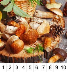 учимся считать грибы