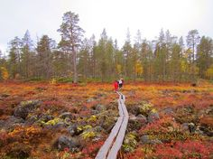 Inari in the fall, Lapland Finland Wonderful Places, Beautiful Places, Lapland Finland, Lappland, City Landscape, Camping Life, Outdoor Life, Places Around The World, Amazing Nature