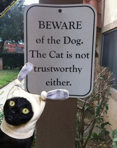 how hilarious is this? http://sulia.com/channel/pets/f/a1e4929b-bf88-440a-8ce0-00d25a9e08ef/?source=pin&action=share&btn=small&form_factor=desktop&pinner=119844723