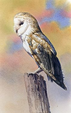 Joe Garcia   WATERCOLOR              Barn Owl