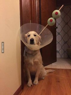 was neutered and became a martini all in one day
