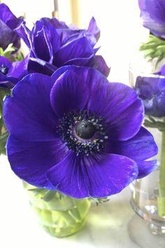 Sunday Bouquet: Blue Anemones - StyleCarrot