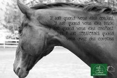 For love of horse riding horse heel … Par amour du cheval quitation cheval talon - Art Of Equitation My Best Friend, Best Friends, Equestrian Quotes, Horse Shirt, Horse Quotes, Horse Riding, Animals And Pets, Lol, Horses