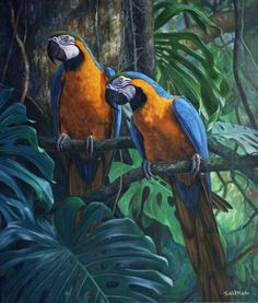 Treasures of the Rainforest