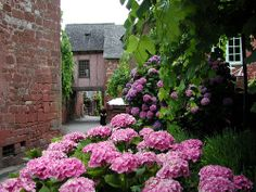 Flowers in Collonges La Rouge