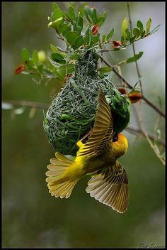 followthewestwind: moment love. Wild Fauna Love