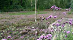Rhododendronpark / Botanika in Bremen, Germany