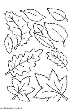 Learning The Designs Of Leaves Coloring Pages