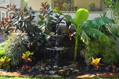 Cast Iron Fountain with tropical plants Tropical Flower Arrangements, Tropical Flowers, Tropical Plants, Cast Iron, It Cast, Tropical Backyard, Custom Cushions, Pool Houses, Air Plants