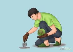 Plant on Your Septic System Drainfield or Leachfield Step 1.jpg