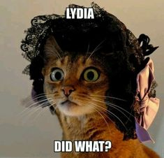 Pride and Prejudice Humour humour Funny Cats, Funny Animals, Cute Animals, Jane Austen Novels, Photos Voyages, Cat Hat, Pride And Prejudice, Fauna, Period Dramas