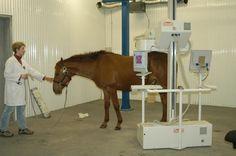 Veterinarian providing advanced nuclear medicine diagnostics (scintography) on a horse. @Alberta Veterinary Medical Association