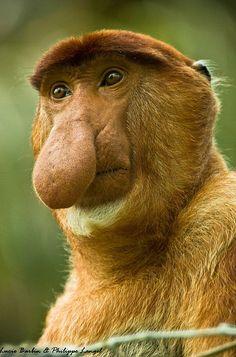 Monkey - good photo