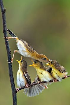 Share your cute animal pictures with us? All Birds, Little Birds, Love Birds, Angry Birds, Pretty Birds, Beautiful Birds, Animals Beautiful, Beautiful Family, Animals And Pets