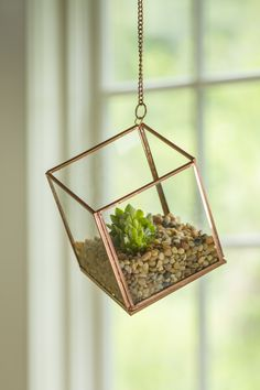 Elevate Your Decor with our Hanging Cube Glass Terrarium                                                                                                                                                      More