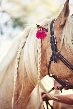 a horse fit for a goddess #palomino