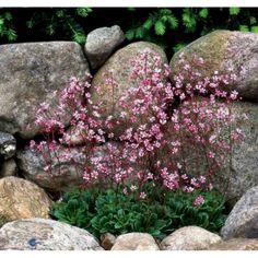 Backyard garden planters front yards ideas for 2020 Amazing Gardens, Beautiful Gardens, Beautiful Flowers, Garden Planters, Garden Beds, Garden Signs, Natural Garden, Shade Plants, Shade Garden