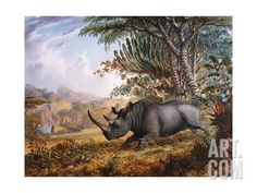 The Black Rhinoceros Charging Giclee Print by Thomas Baines at Art.com