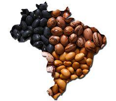 Todo o Brasil Come Feijão