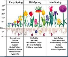 - planning on planting bulbs come fall. planning on planting bulbs come fall.