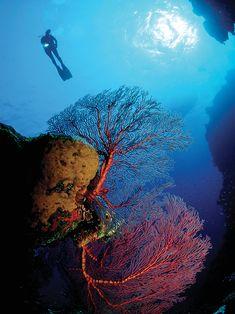 Une plongée dans les Bahamas - Châtelaine San Salvador, Les Bahamas, Life Under The Sea, Place, Underwater, North America, Photos, Nature, Weather