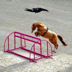 Jump training - horses, equestrian