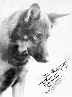 Rin Tin Tin... American hero and silent movie star....