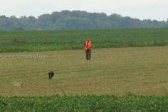 Chasse au lapin au chien courant en plaine.