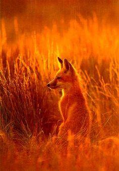 ~ Beautiful fox in the fall ~