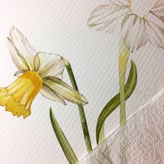 Original Floral Painting by Anna Asetrova Daffodil Bulbs, Daffodils, Original Paintings, Original Art, Narcissus Flower, Dried Flowers, Artwork Online, Watercolor Art, Paper Art