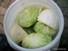 Gogosari in otet la rece - fara fierbere   Savori Urbane Pickled Cabbage, Grubs, Lettuce, Family Meals, Pickles, Vegetables, Urban, Canning, Recipes